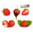 whole and slice strawberry strawberry in a vector image