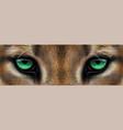 big eyes green eyes a mountain lion cougar vector image