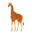 stylized of giraffe vector image vector image