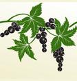 Blackberry hand drawn decorative vector image
