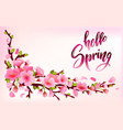 branch of sakura or cherry blossom vector image vector image