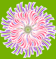 card with asters vector image