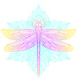 dragonfly over sacred geometry sign isolated vector image