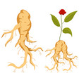 ginseng root leaves flower flat icon set vector image vector image
