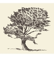 Old tree vintage hand drawn sketch vector image vector image