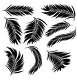 Palm Leaves Silhouette vector image vector image