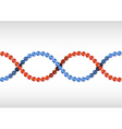 dna red blue vector image