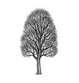 ink sketch maple tree vector image vector image