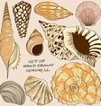 set isolated seashell icons vector image