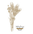 wheat ears and cornflowers bouquet hand drawn vector image vector image