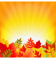 autumn background with sunburst vector image vector image