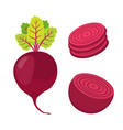 beetroot and slices cartoon flat style vector image vector image