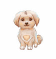 cute puppy with heart on belly vector image vector image