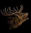 deer realistic artistic color portrait vector image