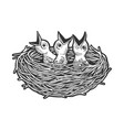 nestling bird in nest sketch engraving vector image vector image