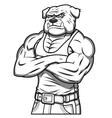 Strong muscle aggressive bulldog 2 vector image