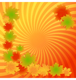 autumn maple leaves background vector image