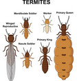 cartoon type of termites collection set vector image vector image