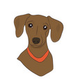 dog portrait profile dachshund look down vector image vector image
