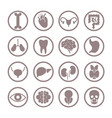 human organ icons lungs and kidneys heart and vector image