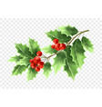 christmas holly tree branch realistic vector image