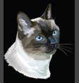 colored thai cat vector image