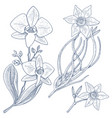daffodil and orchid with leaves and buds wedding vector image vector image