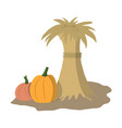 flat design of two orange and brown pumpkins vector image