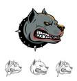 pitbull dog head symbol vector image