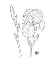 black and white sketch of a flower of iris vector image vector image