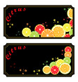 the ripe citrus vector image