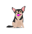adorable chihuahua dog on sitting pose vector image vector image