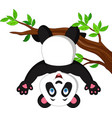 cartoon panda hanging on tree branch vector image vector image
