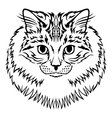 siberian cat vector image vector image