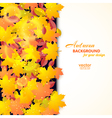 Autumn background with maple and other leaves