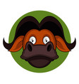 cartoon brown buffalo on white background vector image