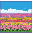 field of tulips vector image