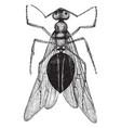 queen ant vintage vector image