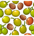 shea nuts pattern on white background vector image vector image