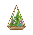glass geometric florarium with succulent in modern vector image vector image