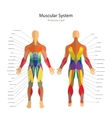 human muscles Exercise and muscle vector image vector image