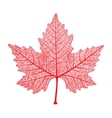 red maple leaf isolated symbol canada autumn vector image