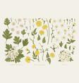 set with plant elements cherry kerria vector image