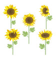 sunflowers set vector image vector image