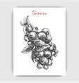 with hand drawn sketch blueberries card vector image