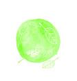 hand drawn watercolor green vector image vector image
