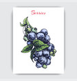 with hand drawn sketch blueberries card vector image vector image