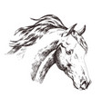 freehand sketch of horse head isolated on white vector image vector image