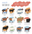 goat breeds icon set animal farming flat design vector image vector image