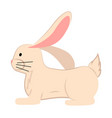 white cartoon rabbit cute vector image